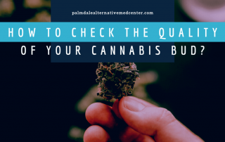 How to Check the Quality of Your Cannabis Bud