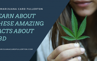 Learn About These Amazing Facts About CBD