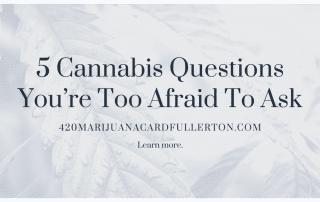 5 Cannabis Questions You're Too Afraid To Ask